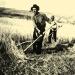 Farmer in Hungary using scythe